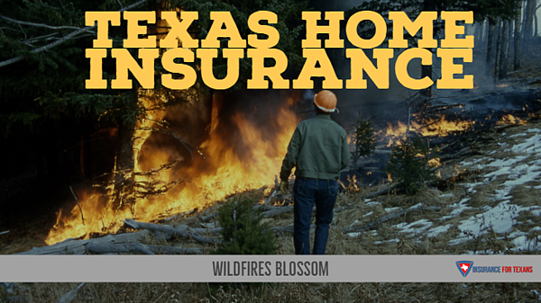 Texas Home Insurance - Wildfires Blossom