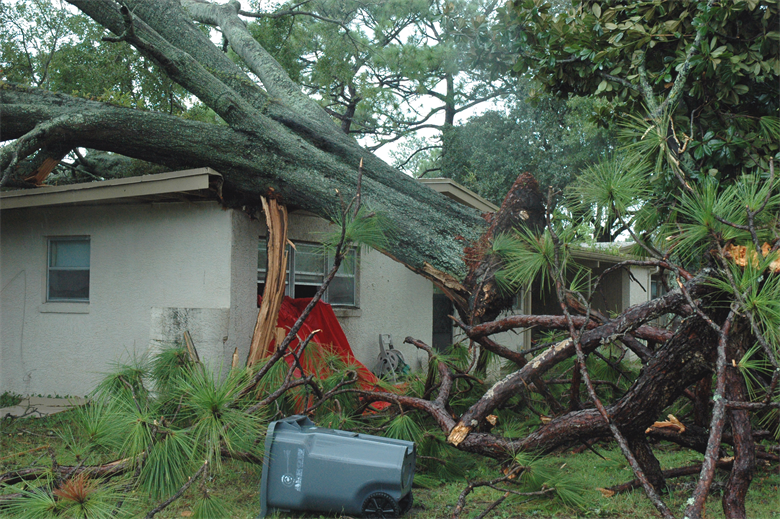 Who Pays When My Tree Falls On My Neighbors Home