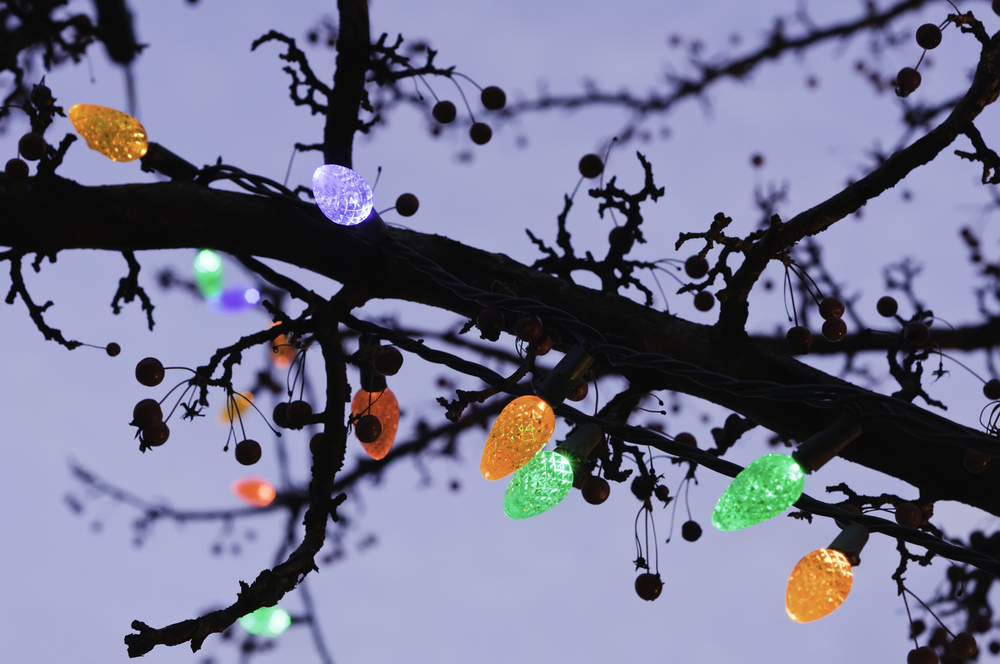 Holiday lights along silhouette of tree branch at sunset