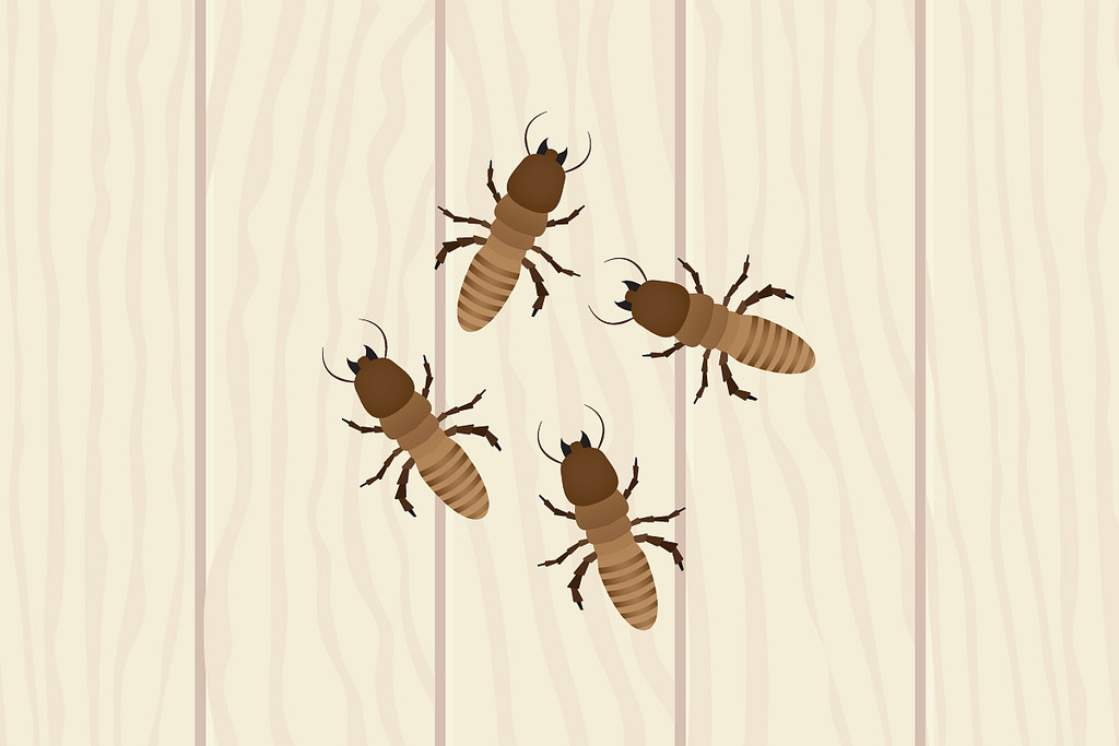 Does Texas Home Insurance Cover Termites?